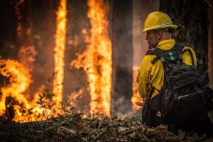 Wild fire in trees with firefighter looking on