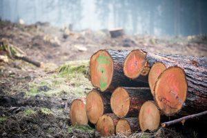 forest management logs
