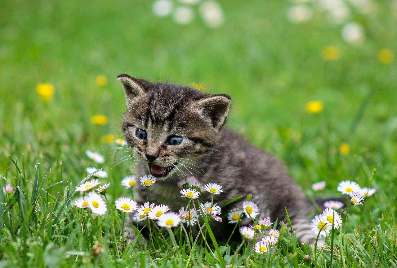 Kitten in field image