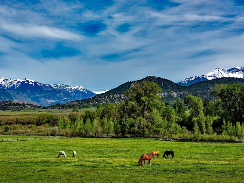 mountain scenery with horses